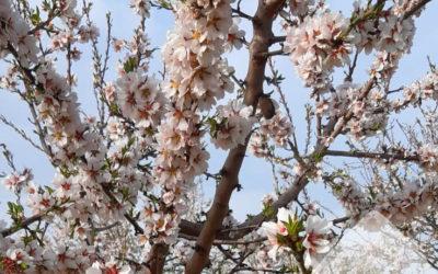 Ha arribat la primavera!